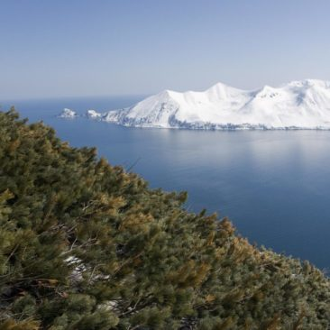 Kamchatka offers skiing to the Pacific Ocean, with breathtaking views