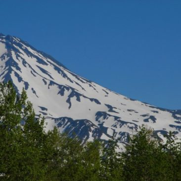 Green and white. Typical Kamchatka's June scenery.