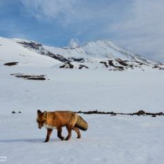 Wildlife of Kamchatka